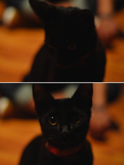 (Lucas Roas) Tags: portrait pet cat blackcat 50mm duo sampa nikond5100 vscofilm
