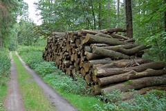 Da werden keine Möbel draus ... (Pixelteufel) Tags: insel bergen rügen wald bäume ostsee baum wandern weg spaziergang mecklenburgvorpommern waldweg baumstamm spazieren forst sträucher forstwirtschaft buschwerk waldgebiet fusweg waldbestand