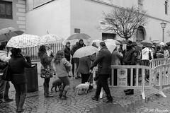 009222 - Alcal de Henares (M.Peinado) Tags: blackandwhite bw copyright espaa byn blancoynegro animal canon spain perro perros animales kdd paraguas quedada 2014 comunidaddemadrid alcaldehenares callemayor sanantn nonamed bendicin canoneos60d bendicindesanantn enerode2014 19012014 quedada19012014