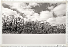 A Line of  Winter Soldiers (chuck madden) Tags: trees winter snow nature clouds kentucky winterscape winterscene chuckmadden