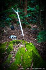 Rainforest Sculpture Scenic World -10 (Gary Hayes) Tags: sculpture art rainforest bluemountains scenicworld