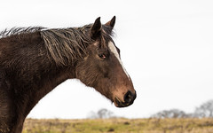 The Horse. (CWhatPhotos) Tags: pictures above county horse brown 3 cold cute weather animal proud standing canon that photography spring day foto durham image artistic cloudy pics mark walk iii picture pic images have photographs photograph fotos fields 5d about dslr which tops mk contain sacriston cwhatphotos