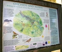 Orchids & Alders (Adam Swaine) Tags: uk england english nature canon countryside walks maps trails 2014 swaine northdownskent signscharingvillage