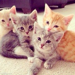 This is your day! Sign up for Louisiana Film Prize 2015 (www.LaFilmPrize.com), shoot your short film in NWLA and win the the world's largest cash prize for a short narrative film. Then, with your winnings, adopt these cute kittens and, ultimately, make th