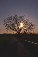 Light is a part of life (Pavel Cervenka Photographer) Tags: road light sunset sky sun sunlight tree nature beautiful canon wonderful river evening nice colorful soft republic czech dusk awesome smooth minimal serene rays through nightfall pavel cervenka ef35f2 60d