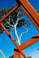 Gumtree and Rust (Leon Sammartino) Tags: sculpture art metal modern gum grey rust spirit bare bark tasmania gumtree stripped devonport fujifilmx10tasmaniaaustralia
