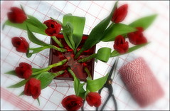 _a burst of spring (SpitMcGee) Tags: red rot tulips redwhite scissors checkered spool tulpen dishtowel schere geschirrtuch kariert garnrolle rotweis spitmcgee