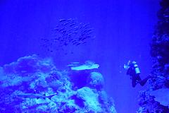 DSC_0607 (stacheltierchen) Tags: blue sea water nikon flickr under deep diving tauchen unterwasser d3300