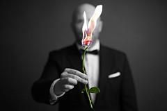 Love Hurts (Donald Palansky Photography) Tags: sony alpha me fire rose donaldpalansky burningrose sonyslta99v flower tuxedo suitandtie