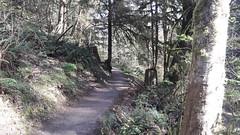 20160331_095203 (ks_bluechip) Tags: creek evans trails preserve sammamish usa2106