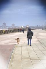 Into the Wind (Tony Shertila) Tags: england dog geotagged europe waterfront unitedkingdom britain outdoor windy gale walkway promenade wirral newbrighton merseyside gbr walkng newbrightonward 20151129105118 geo:lat=5344011628 geo:lon=305608749