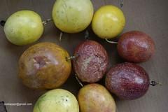 MaracujasDSC7435 (costapppr) Tags: passiflora cor maracuj fruto edulis