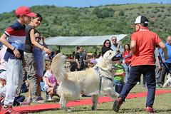 DSC_9952 (Dario Nardacci) Tags: toscana grosseto maggio roselle 2016 inaugurazione countryvillage animalimaltrattati
