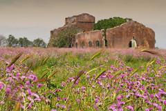 The same Field (Rickydavid) Tags: field campo fiori casale