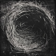 Nest-5198 (Poetic Medium) Tags: blackandwhite stilllife bird nature robin square ipod nest organic mextures kitcamghostbird