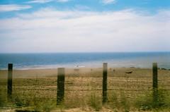 45460019 (danimyths) Tags: ocean california film beach water coast waterfront pacific roadtrip pch pacificocean westcoast californiacoast filmphotography pacificcostalhighway