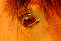 horse eye (Brian Eagar Nature Photography) Tags: test nature animal june outside fuji 2016 100400 xt1 fuji100400 fujixt1 xf100400 fujixf100400