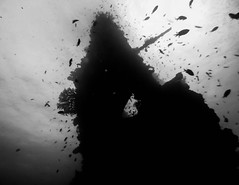 Into the Abyss (sumehrgwalani) Tags: blackandwhite bali white fish black ship underwater silhouettes diving shipwreck wreck