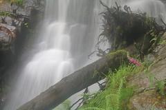 Parque natural de #Gorbeia #Orozko #DePaseoConLarri #Flickr -121 (Jose Asensio Larrinaga (Larri) Larri1276) Tags: 2016 parquenatural gorbeia naturaleza bizkaia orozko euskalherria basquecountry