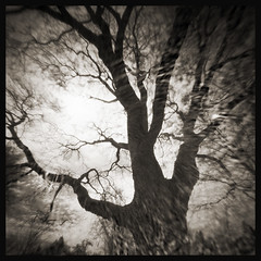 WPPD Tree # 1 (DRCPhoto) Tags: world 6x6 photography day pinhole 2016 wppd ondu lenslessphotography