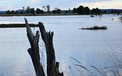 Seelim's Creek (dustaway) Tags: winter water landscape flooding australia stump nsw australianlandscape barbwire northernrivers richmondvalley seelimcreek seelemscreek seelimscreek