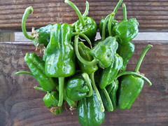 Padron Peppers_6.6.16