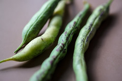 Green Beans from the Garden, Glenview, Oakland, California USA (takasphoto.com) Tags: abstract bean beans color finebeans food foodporn frenchbeans frenchgreenbeans fuji fujifilm fujinon fujinonxf60mmf24r fujinonxf60mmf24rmacro garden gardening gemse green greenbeans greenplants groente grnsaker haricotbeans haricotsverts kingdomplantae lens lifestyle lgume macro nature outdoor photography plantae rau snapbean snapbeans stringbean stringbeans vegetable vegetables vegetales verde verdura warzywa zldsg