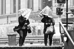 (bigboysdad) Tags: street blackandwhite bw monochrome rain au sydney australia olympus monotone newsouthwales raining 75mm m43 ep5