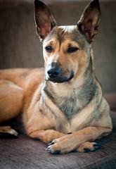 D3A_9012 (Micke Jonasson) Tags: dog del naked perú perro sin pelo peruvian nakenhund peruansk