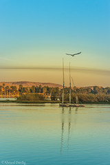Good morning from Aswan, Egypt (Ahmed Dardig) Tags: travel trees sky reflection bird sunrise landscape photography boat egypt nile mount explore aswan goodmorning nileriver explored southegypt