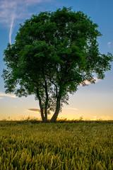 Tree (Gary Hoyles UK) Tags: lonetree