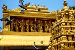 La lumière de l'amour brille de votre cœur. (- Ali Rankouhi) Tags: india temple bangalore sri doves پرنده 2016 معبد swamy پرواز someshwara هند بنگلور