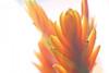 Spring Macro (pallab seth) Tags: park england flower macro london nature garden spring dof blossom bokeh outdoor petal bloom barking signofspring springgarden 2016 barkingpark samsungnx1 samsung60mmf28macroedoisssalens