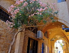 Jaffa (Yafo), Israel (jackfre2) Tags: israel telaviv jaffa yafo alleys streetlets cafs ateliers shops stairs jerusalemstone flowers