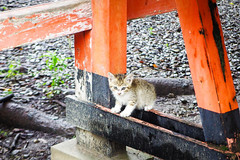 Today's Cat@2016-06-30 (masatsu) Tags: cat pentax catspotting mx1 thebiggestgroupwithonlycats