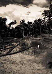 Ubud, Bali (th.tison) Tags: bali nb ubud virage indonsie rizire