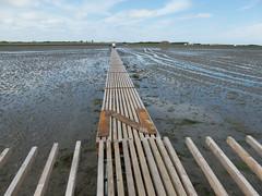 P1010337 (henriettej) Tags: nederland friesland oosterendterschelling