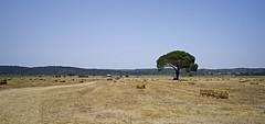 Vale do Sorraia (Capturedbyhunter) Tags: portugal landscape pentax outdoor 28mm tokina sl santarm fernando 28 marques k1 ribatejo coruche sorraia caador fajarda