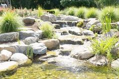 11145177_10153099682912076_4385283096219650831_o (jmac33208) Tags: park new york roses rose garden central schenectady