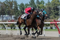 7-9-2016 Cal Expo Thoroughbred Racing (14 of 75)_filtered (Steven.Styles) Tags: california summer horse speed statefair fair racing horseracing sacramento calexpo 2016 thoroughbredracing stevenstyles