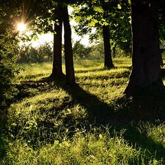 Carr de verdure (denis.fleurot) Tags: texture nature soleil vert ombre arbre verdure coucherdesoleil herbe tronc rayondesoleil formatcarr