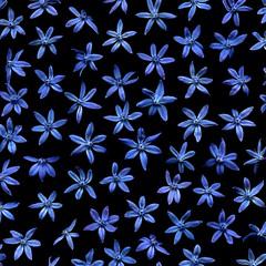 55168.01 Scilla siberica (horticultural art) Tags: flowers bulb pattern explore scilla springflowers scillasiberica horticulturalart 532013