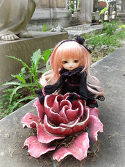 .:: Miyuki ::. (Bunraku Doll) Tags: cute girl cemetery grave doll ns alice longhair tiny kawaii bjd  resin custom luts miyuki delf pinkhair colette    normalskin latisize bunrakudollfaceup tinydelf