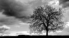 against the sky (HJK Photography) Tags: sky bw white black tree monochrome silhouette clouds mono service backlit