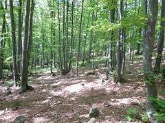 Balkan mountains (Gonrah) Tags: trees mountains forest balkan