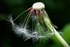 Like Spermazota (Dave R Benjamin) Tags: flowers macro floral closeup garden petals gardening blossoms grow growth vegetation growing blooms