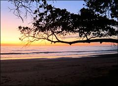 """Quel ramo di """"Almendra"""" che si allunga sulla spiaggia di Manzanillo (ticinoinfoto) Tags: sunset costarica tramonti centroamerica peninsuladenicoya provinciadepuntarenas distritodecobano playamanzanillodecobano atardaser"""