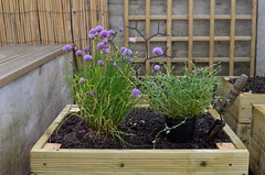 Improvements (Lou Morgan) Tags: uk summer england london self garden spring herbs beds trellis growing chives thyme sustainability raised improvements sufficiency