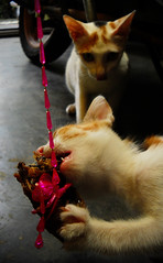 I Want Some (AbdillahAbi) Tags: cats fish cat nikon kitten calico pointandshoot lele anak kucing