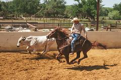 Animalistic (Lopiccolo) Tags: ranch horses cowboys texas bulls rodeo alvarado